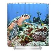 Hawksbill Turtle Feeding On Sponge Shower Curtain by Karen Doody