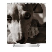 Heart You Italian Greyhound Shower Curtain