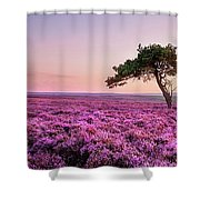 Heather At Sunset  Shower Curtain