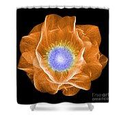 Hellebore Flower, X-ray Shower Curtain