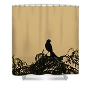 High In The Tree Shower Curtain