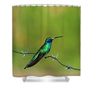 Hummingbird On Barbed Wire Shower Curtain