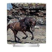 Icelandic Black Stallion, Iceland Shower Curtain