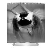Img_0001 - Carolina Chickadee Shower Curtain