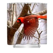 Img_0001 - Northern Cardinal Shower Curtain