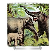 Indian Elephant, Endangered Species Shower Curtain