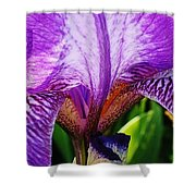 Iris Macro Shower Curtain