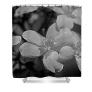 Jatropha Blossoms Painted Bw Shower Curtain