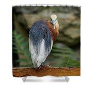 Javan Pond Heron At Zoo Berlin Shower Curtain
