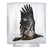 Juvenile Bald Eagle Shower Curtain