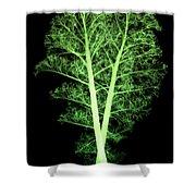 Kale, Brassica Oleracea, X-ray Shower Curtain