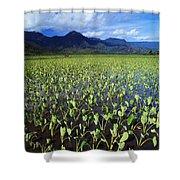 Kauai, Wet Taro Farm Shower Curtain