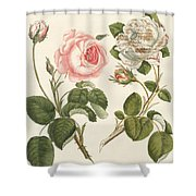 Kinds Of Roses Shower Curtain