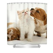 Kitten And Puppies Shower Curtain by Jane Burton