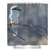Kookaburra On A Branch Shower Curtain