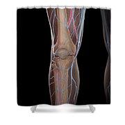 Leg Blood Supply Shower Curtain
