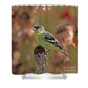 Lesser Goldfinch Shower Curtain