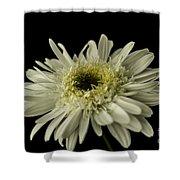 Leucanthemum Highland White Dream Shower Curtain