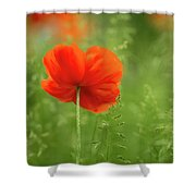 Lone Poppy Shower Curtain