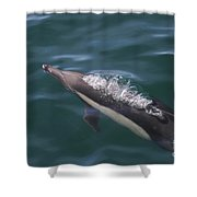 Long-beaked Common Dolphins In Monterey Bay 2015 Shower Curtain