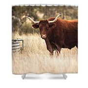 Longhorn Cow In The Paddock Shower Curtain