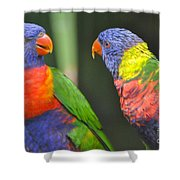 2 Lories In Discussion Shower Curtain