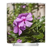 Madagascar Rosy Periwinkle Shower Curtain