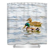 Male And Female Ducks Shower Curtain