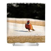 Male Ring-necked Pheasant Shower Curtain