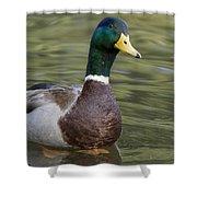 Mallard Drake Santa Cruz Monterey Bay Shower Curtain