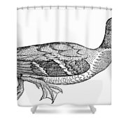 Mallard Duck Shower Curtain