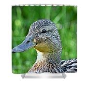 Mallard Duck Hen Shower Curtain