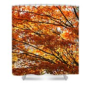 Maple Tree Foliage Shower Curtain