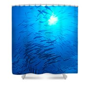 Micronesia Marine Life Shower Curtain