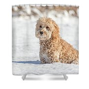 Mini Golden Doodle  Shower Curtain