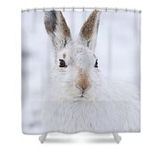 Mountain Hare In The Snow - Lepus Timidus  #3 Shower Curtain
