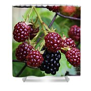 My Blackberries Shower Curtain