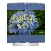 My Blue Hydrangeas Shower Curtain