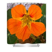 Nasturtium Shower Curtain