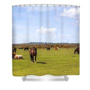 New Forest - Hampshire - Uk Shower Curtain