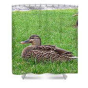 New Zealand - Pair Of Mallard Duck Shower Curtain