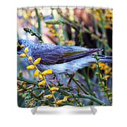 Noisy Miner In Oz Shower Curtain