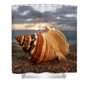 North Shore Seashell Shower Curtain