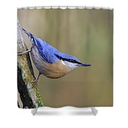 Nuthatch -- Shower Curtain