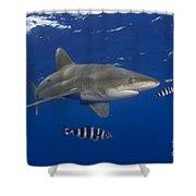 Oceanic Whitetip Shark Shower Curtain