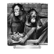 Orangutans Shower Curtain