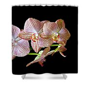 Orchid Phalaenopsis Flower Shower Curtain