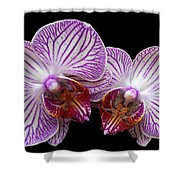 2 Orchids Shower Curtain
