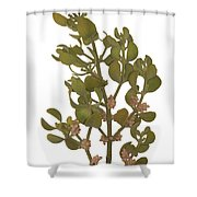 Pacific Mistletoe Shower Curtain
