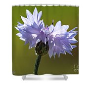 Pale Blue Bachelor Button From The Double Ball Mix Shower Curtain